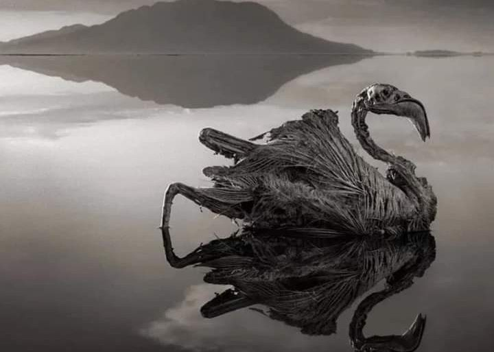 Lago Natron, colui il quale trasforma gli animali in statue di pietra